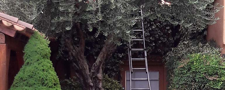 Poda i manteniment de jardins a Sabadell